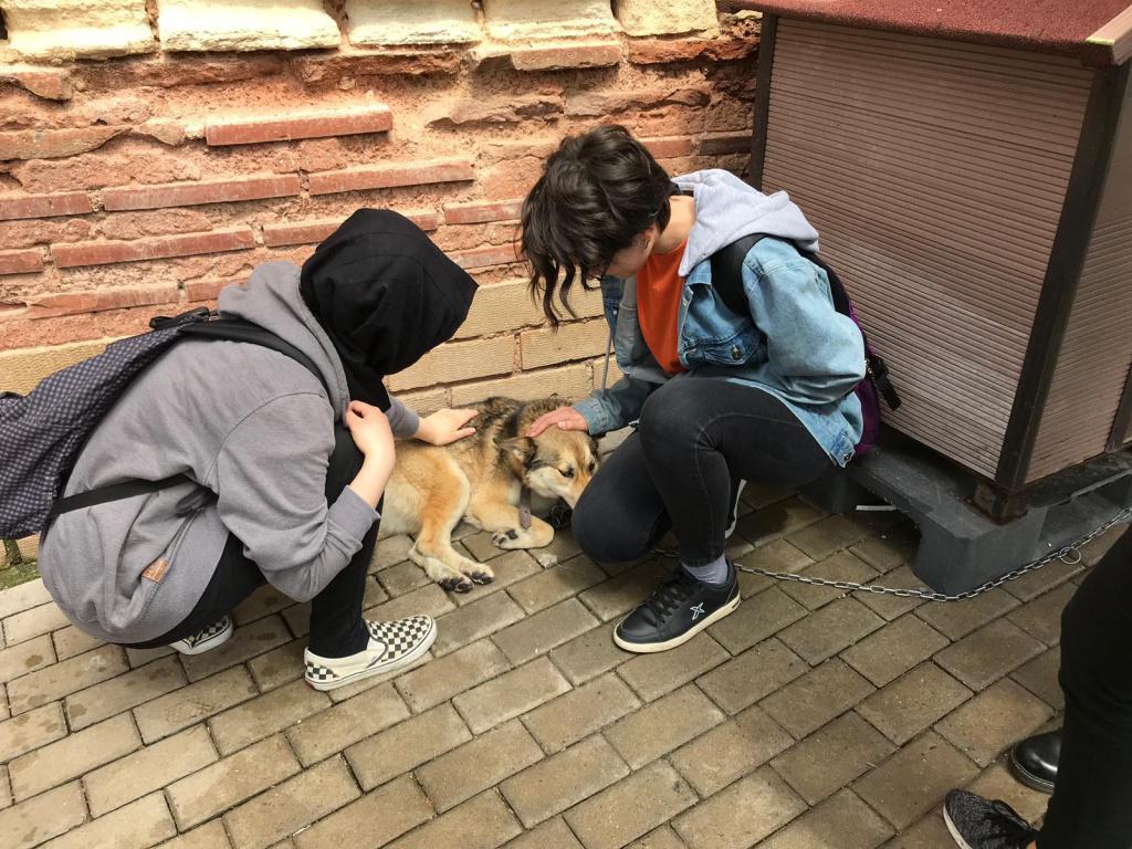 Yedikule Hayvan Barınağında keyifli bir gün geçirdik.